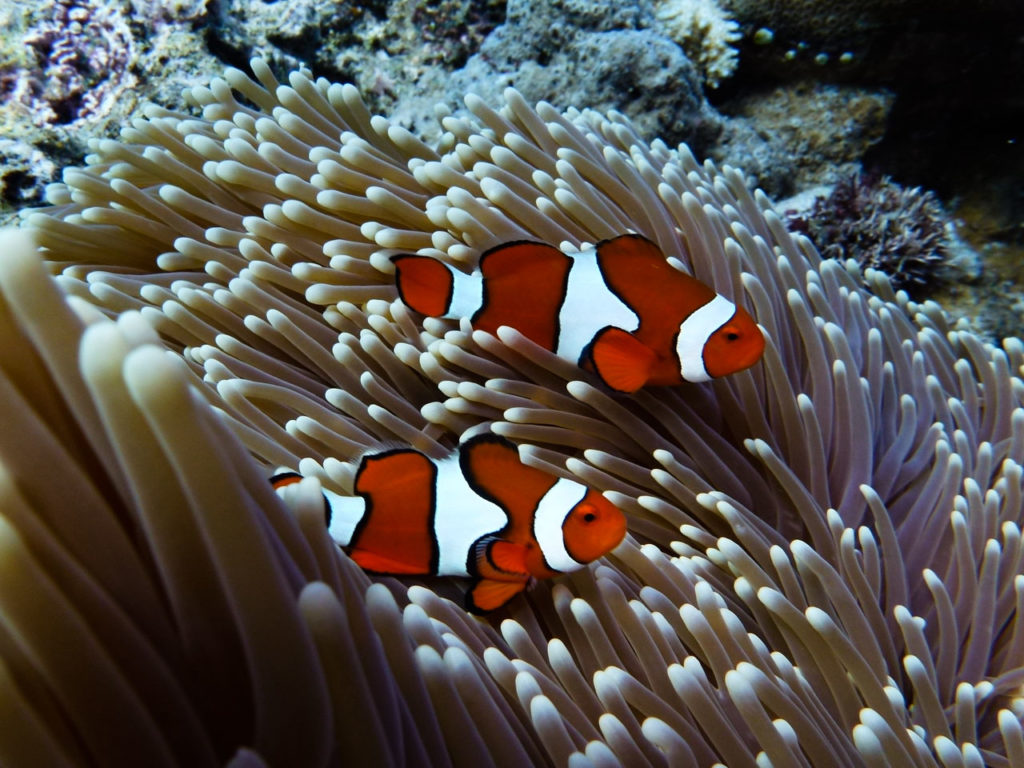 Who wants to find Nemo?