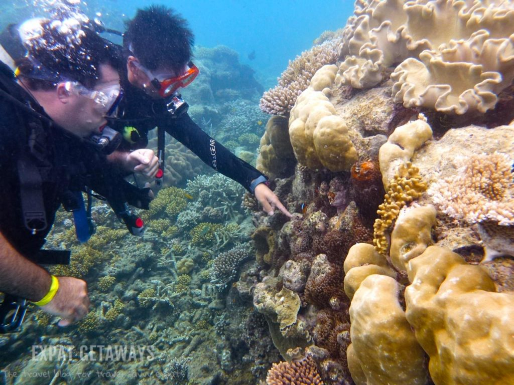 Your instructor will show you what is hiding in the coral