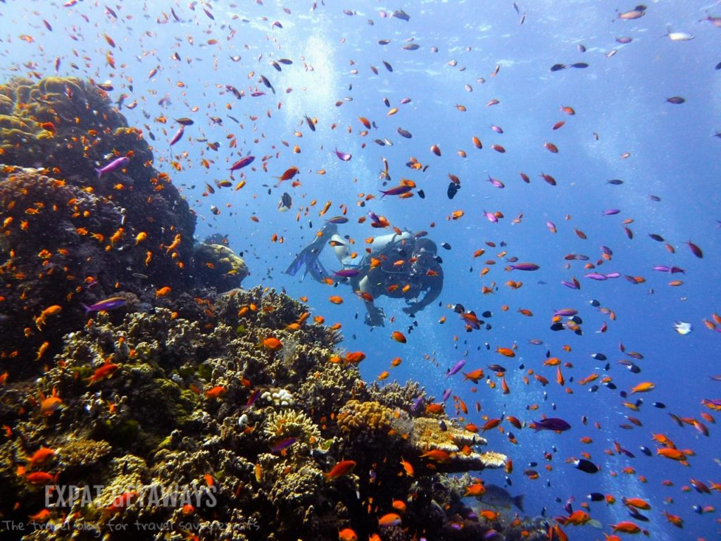 The Ribbon Reefs are sensory overload with colourful fish swimming like confetti around you. Great Barrier Reef, Scuba