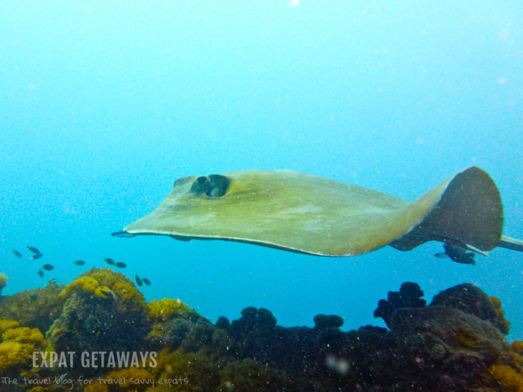 I came face to face with giant rays on the SS Yongala. Great Barrier Reef scuba