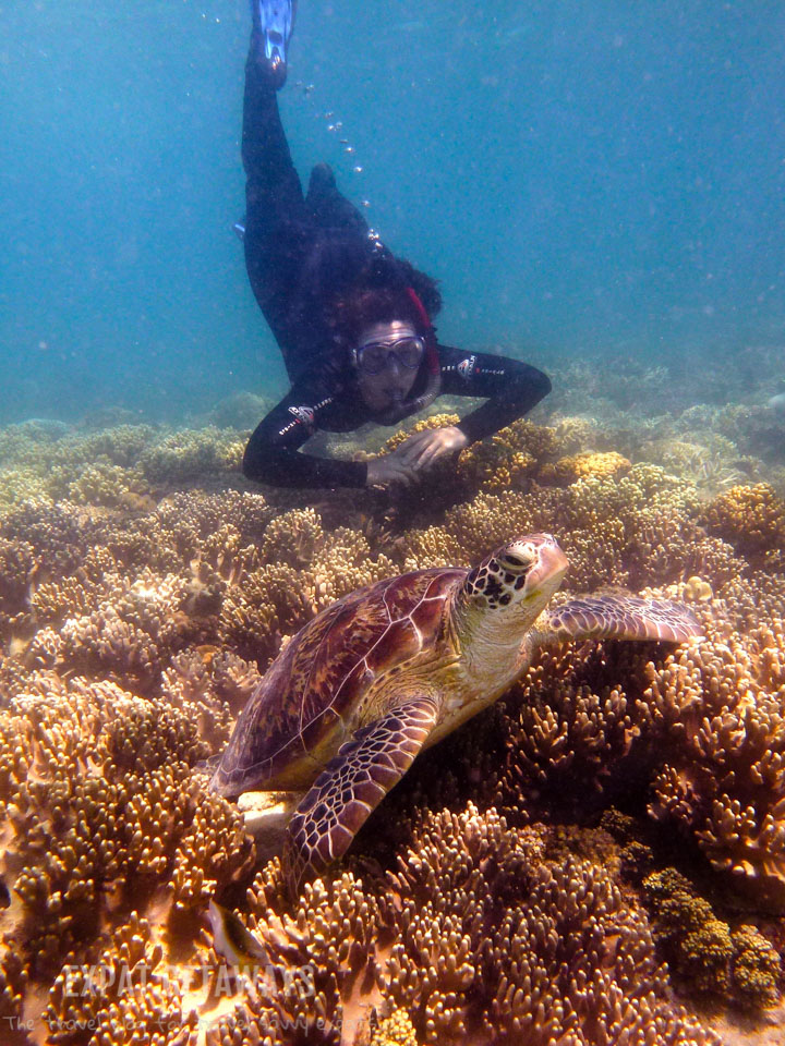 Snorkelling with my favourite sea creature with Ocean Safari