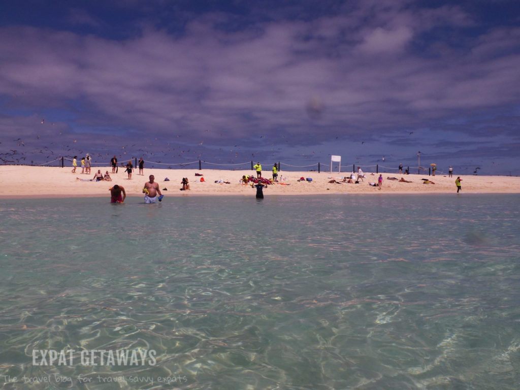 Michaelmas Cay... A beautiful beach and important breeding ground for sea birds