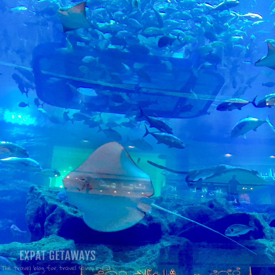 An aquarium inside a shopping mall. Only in Dubai...
