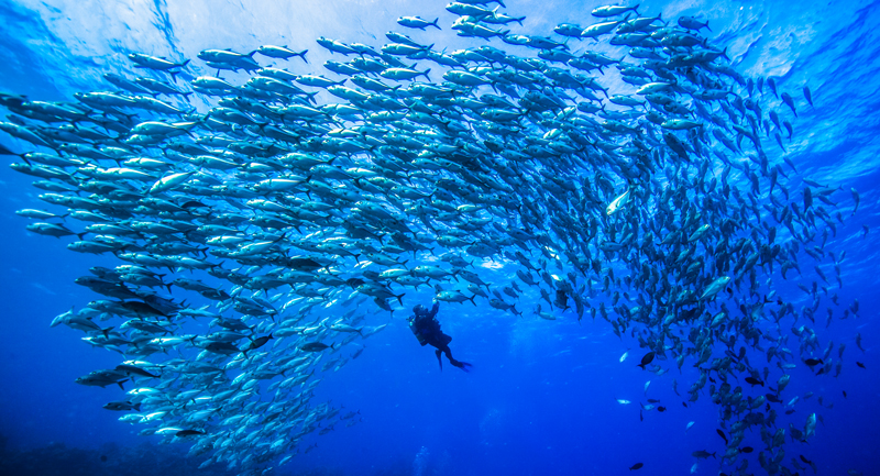 Perfect viz and hundreds of schooling fish are waiting for you at Osprey.